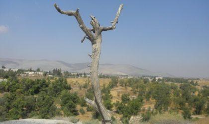 Naśladowcy i szydercy: pasja według św. Łukasza